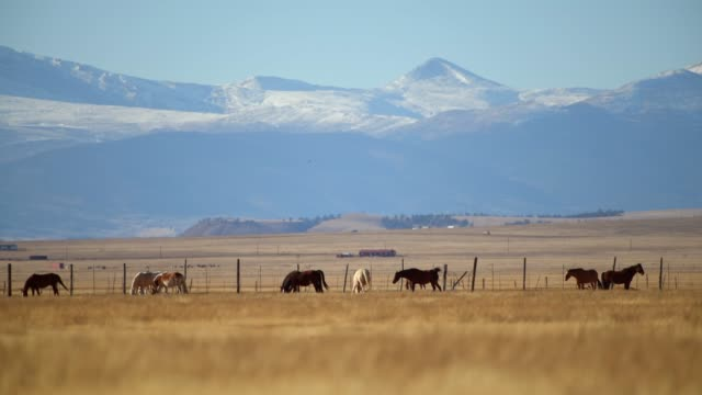 colorado countryside vista with horses on the grassland. - ранчо стоковые видео и кадры b-roll