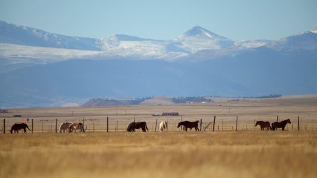 colorado countryside vista with horses on the grassland. - животноводство стоковые видео и кадры b-roll