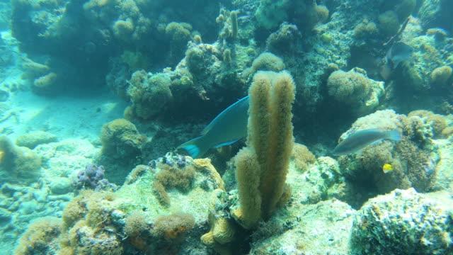 stockvideo's en b-roll-footage met de koraalvissen die van de breker onderwater in turken en caicos zwemmen - providenciales