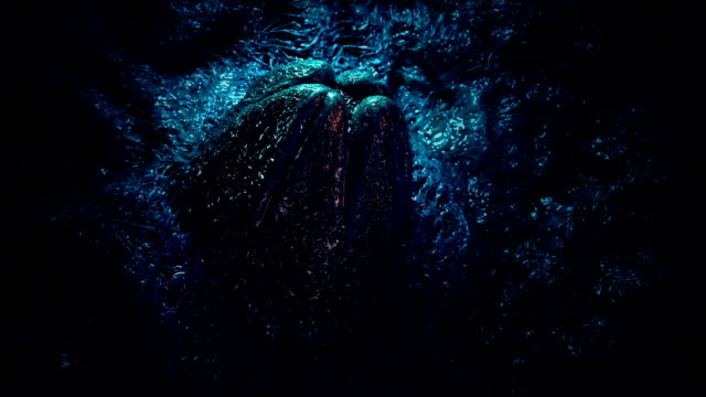 Video Colorful Alien Egg Rotating Shot