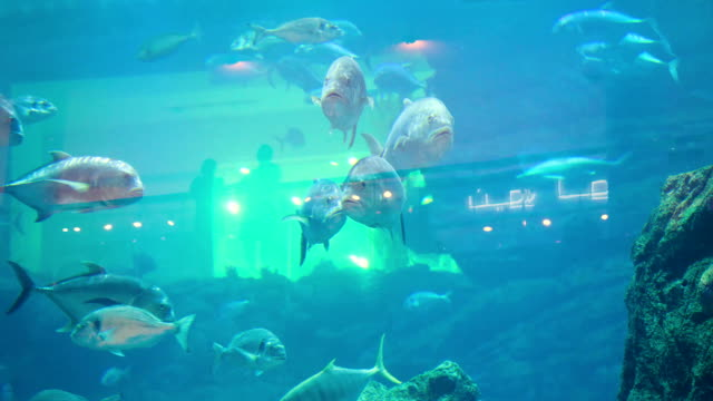 Colorful aquarium, showing different colorful fishes swimming. Aquarium fish will delight you with its unforgettable beauty of the underwater world video