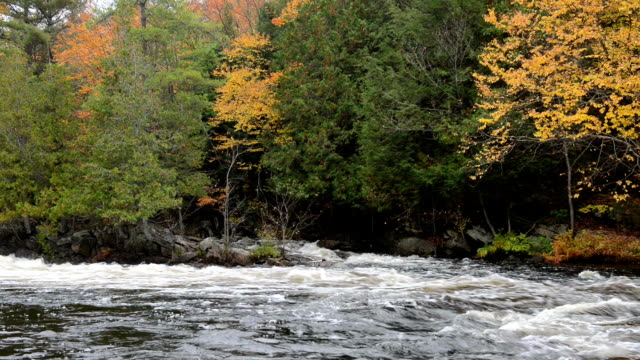 Colorful autumn forest on a riverside of Oxtongue river Colorful autumn forest on a riverside of Oxtongue river, Muskoka, Ontario ontario canada stock videos & royalty-free footage