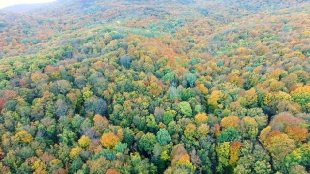 vídeos de stock e filmes b-roll de aerial: colorful autumn forest on clear sunny day - multicóptero