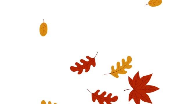 vídeos de stock, filmes e b-roll de outono colorido deixa gráficos de movimento caindo - folha
