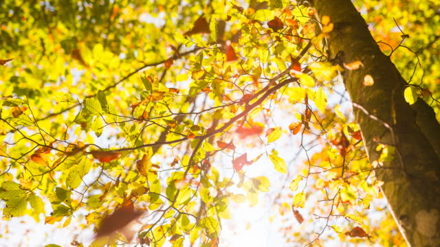 vídeos de stock e filmes b-roll de colorful autumn leaves falling off a tree - setembro