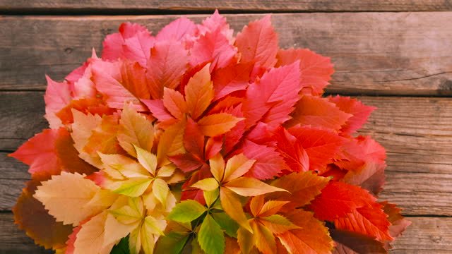 Colorful autumn leaves on rustic wooden background with copy space