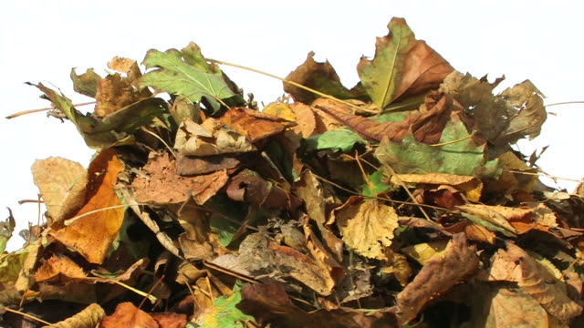 Colorful Autumn Leaves video