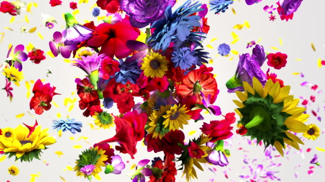colorful big flowers background in 4k - flowers стоковые видео и кадры b-roll