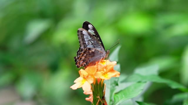 Colorful butterflie perched on leaves or flowers in warm spring
