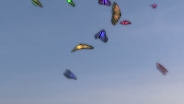 Colorful Butterflies Flying video