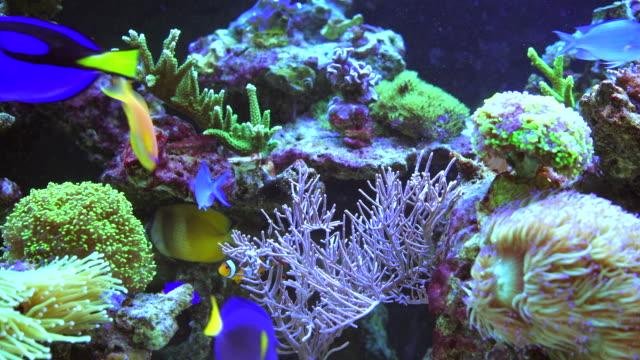 красочный аквариум коралловый риф - морская рыба стоковые видео и кадры b-roll