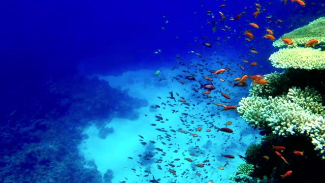 vídeos y material grabado en eventos de stock de arrecife de coral colorido. buceo emocionante - micronesia