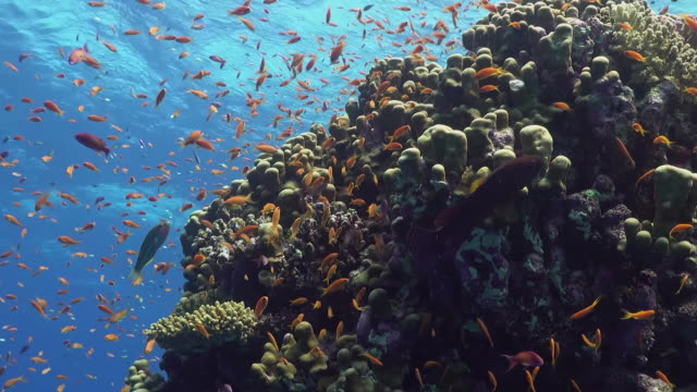 A colorful coral reef underwater background.