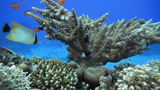 Colorful corals and fish. Tropical fish. Underwater life in the ocean. video