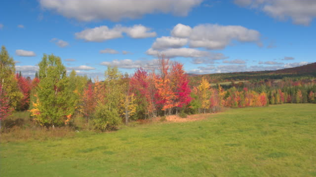 AERIAL Colorful fall trees and glades in sunny autumn forest underneath blue sky video