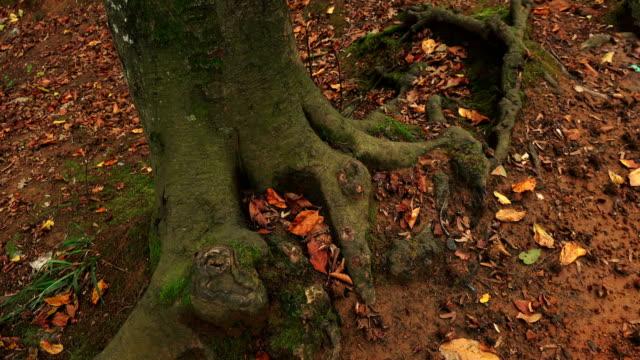 buntes laub unter den wurzeln der bäume - ahorn stock-videos und b-roll-filmmaterial