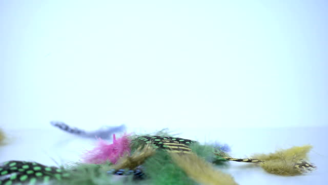 colorful feathers falling in slow motion. - boho chic filmów i materiałów b-roll