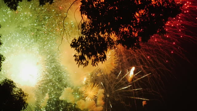 colorful finale of a fireworks illuminating the trees - independence day stock videos & royalty-free footage