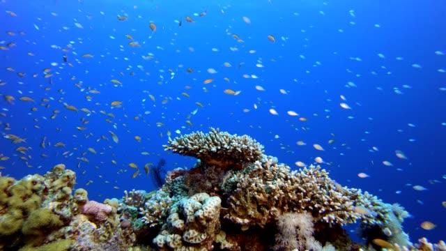vídeos y material grabado en eventos de stock de peces coloridos y coral duro - arrecife fenómeno natural