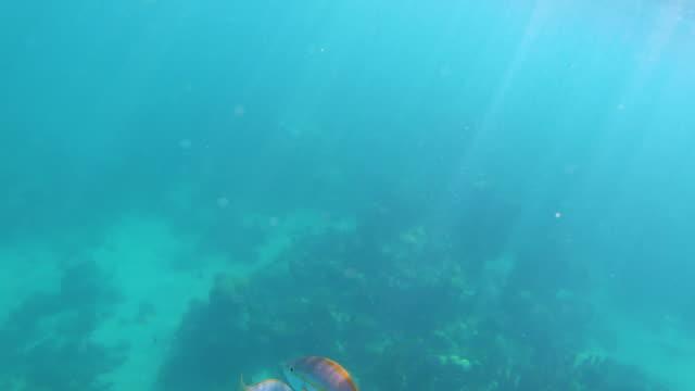 stockvideo's en b-roll-footage met kleurrijke vissen in blauw tropisch water - providenciales