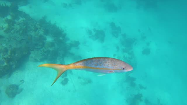 stockvideo's en b-roll-footage met kleurrijke vissen in glashelder oceaanwater - providenciales