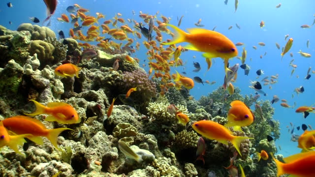 Colorful Fish on Vibrant Coral Reef, static scene video