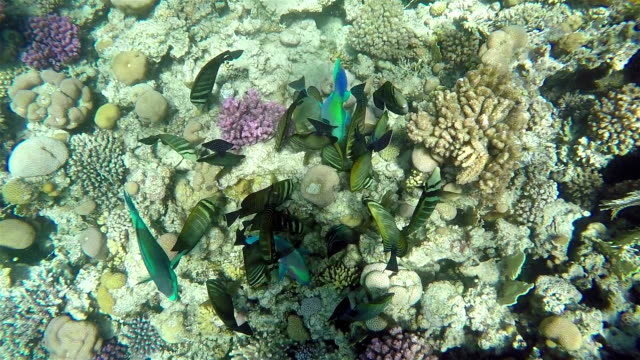 Colorful Fish On Vibrant Coral Reef, View from Above, Red Sea. video