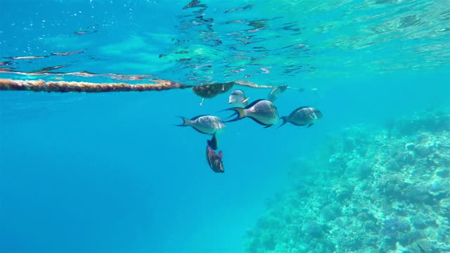 Colorful Fish. Red Sea video