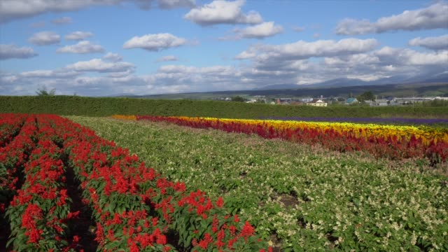 カラフルな花のフィールド - 里山点の映像素材/bロール