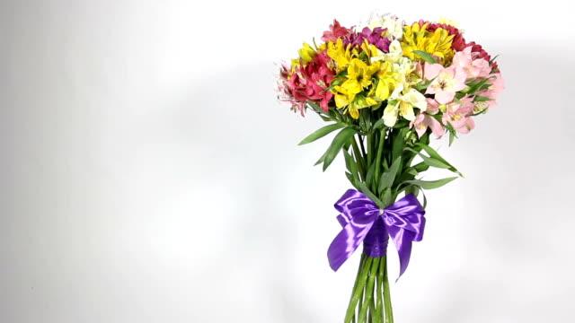 vídeos de stock, filmes e b-roll de buquê de flores coloridas de alstroemeria - arméria