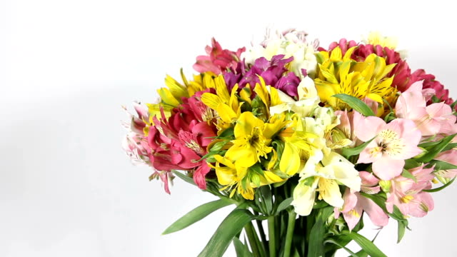 colorful flowers bouquet of alstroemeria - триллиум стоковые видео и кадры b-roll