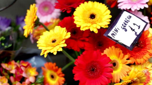 colorful flowers - blomstermarknad bildbanksvideor och videomaterial från bakom kulisserna