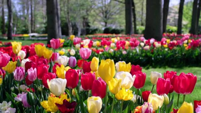 Colorful mixed spring border