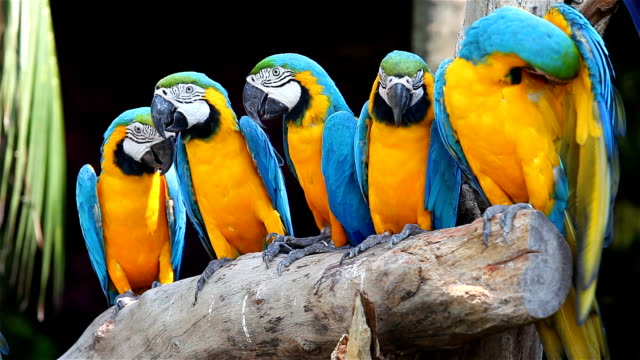 Colorful of macaw bird's video