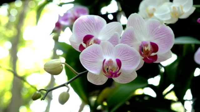 farbenprächtige orchidee blume im garten - orchidee stock-videos und b-roll-filmmaterial