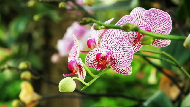 Colorful Orchid Flower video