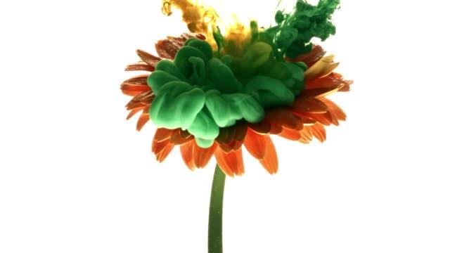 Renkli boya bulut beyaz arka plan üzerinde güzel çiçek püskürtme. video