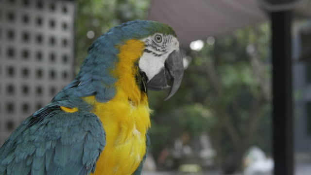 A colorful parrot turns its head