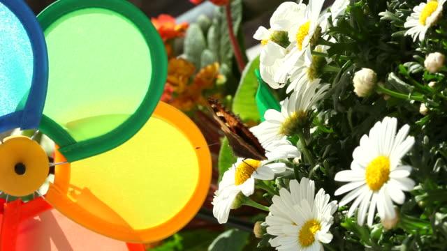 カラフルな風車に daisies とバタフライ - 花壇点の映像素材/bロール