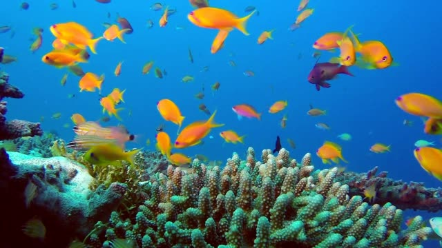 Colorful Reef Marine Life video