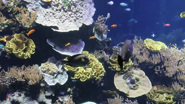 Colorful sea background Colorful corals and gorgonians on the rocks. coral cnidarian stock videos & royalty-free footage