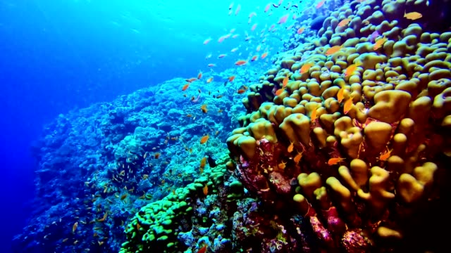 Colorful sea bottom. Underwater scenery video