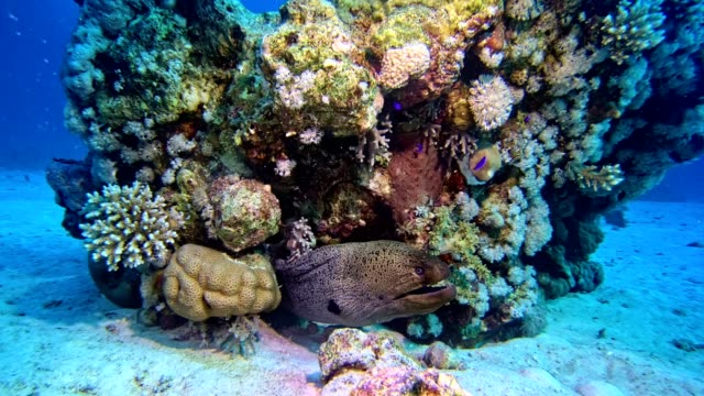 Colorful sea bottom. Underwater scenery Colorful fish swimming close to a bottom. Coral reef coral cnidarian stock videos & royalty-free footage