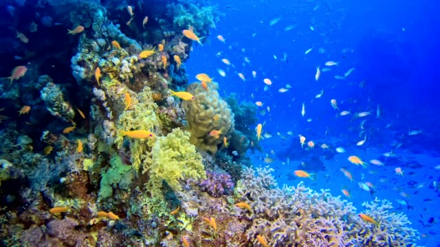 Colorful sea bottom. Underwater scenery