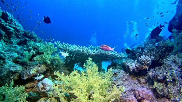 Colorful sea bottom. Underwater scenery Colorful fish swimming close to a bottom. Coral reef reef stock videos & royalty-free footage