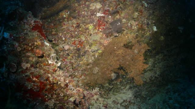 vídeos y material grabado en eventos de stock de coloridos abanicos de mar coral en agujero oscuro bajo el agua - sea life park