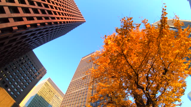Colorful Tree and Building Colorful Tree and Building ginkgo tree stock videos & royalty-free footage