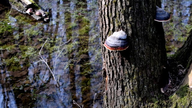 Colorful tree fungi on tree trunk near water