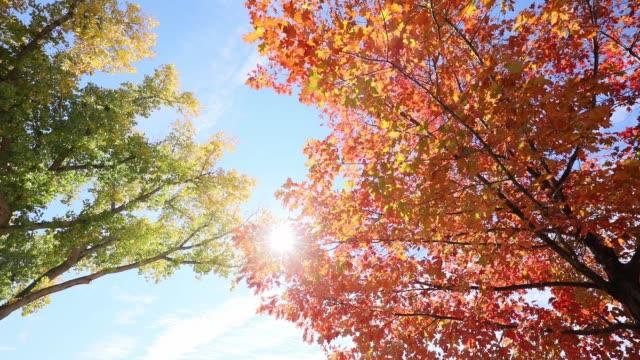 färgglada träd löv i höst hdr - high dynamic range imaging bildbanksvideor och videomaterial från bakom kulisserna