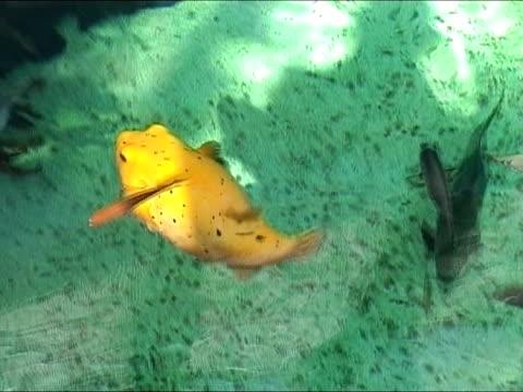 bunte tropische fische - aquarium oder zoo stock-videos und b-roll-filmmaterial